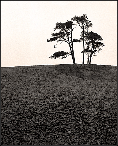 Trees-on-the-hill
