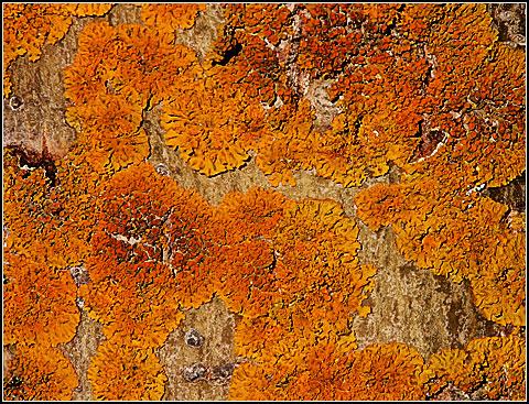 Lichen Abstract